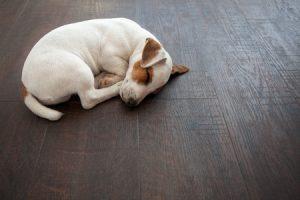 Dog on Hardwood Flooring